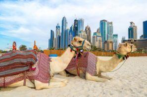 Auto rentimine Araabia Ühendemiraadid
