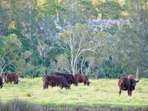 Autorent Taree, Austraalia