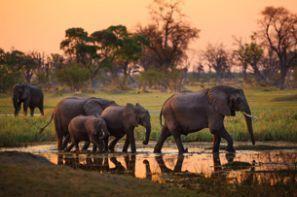 Auto rentimine Botswana