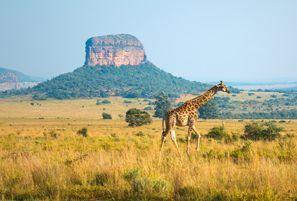 Autorent Ellisras, Lõuna-Aafrika
