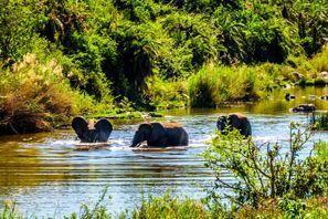 Autorent Phalaborwa, Lõuna-Aafrika